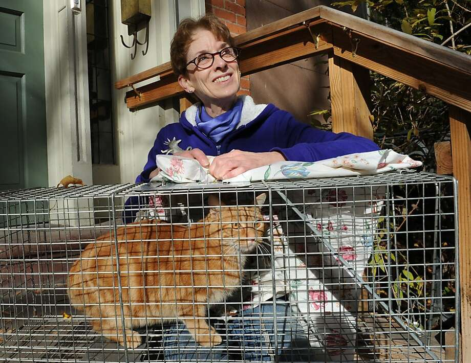 Sorry, Charlie:Charlie the feral cat perks his ears upon learning that Lynn Kopka, president of Troy (N.Y.) City Council and the Washington Park Association, is also the founder of Operation SNIP. Bet you can guess what Operation Snip does. Photo: Lori Van Buren, Albany Times Union