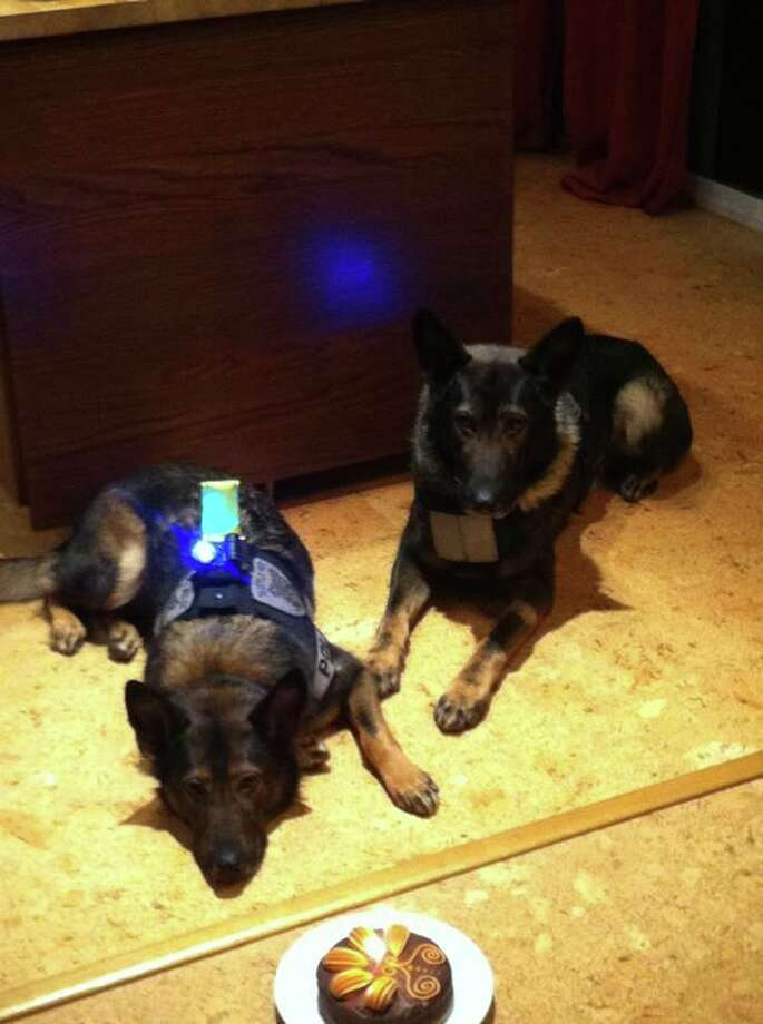 Seattle police dogs Jaeger and Ziva celebrated their fifth birthdays last year at the home of Jaeger's handler, Officer Rory Smith. Photo: Seattle Police Foundation