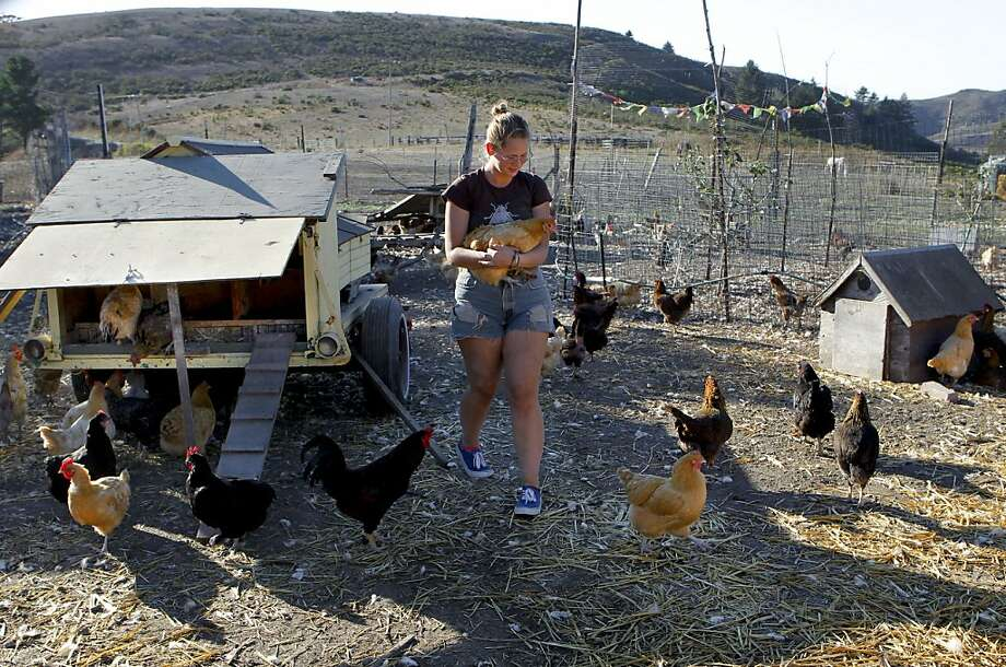 MacKenzie Curtis tends to the chickens as part of her duties in exchange for room and board at the Iris Ridge Ranch in Half Moon Bay, Ca., on Tuesday Nov. 12, 2013. WWOOFing has become a cultural phenomena in Northern California. WWOOF started as an acronym for Working Weekends on Organic Farms, a loose-knit organization that helped placed volunteers on farms in exchange for free food, a free place to stay and an opportunity to study farming. Photo: Michael Macor, The Chronicle