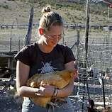 WWOOF volunteers pitch in on organic farms - SFGate
