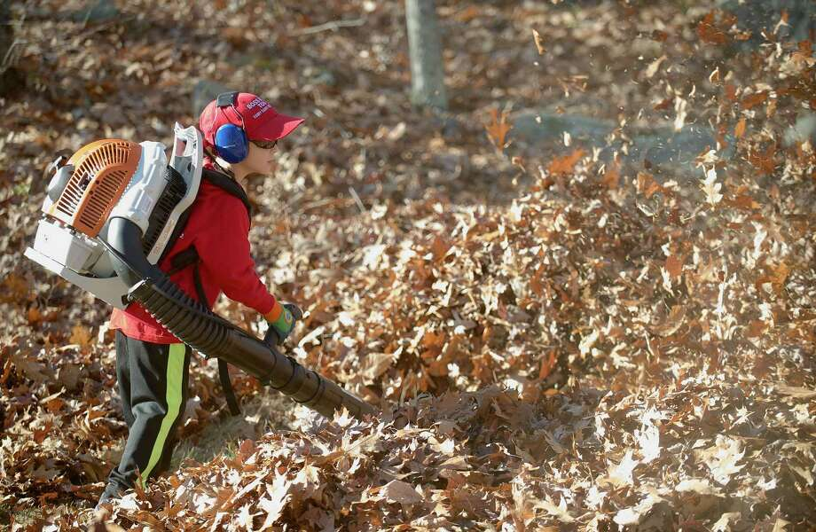 Timmy Cartwright, 5, uses his own leaf blower, under the watchful eye of his father David Cartwright, to clear a yard in Brookfield, Conn, as part of  the annual Rake n Bake on Saturday November 16, 2013.  Timmy is the grandson of the founder of the event, Peter Brady. Photo: H John Voorhees III / The News-Times Freelance