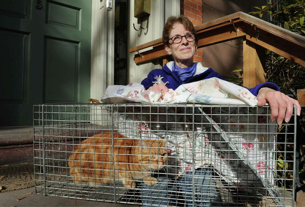 Troy City Council President and President of the Washington Park Association Lynn Kopka sits with feral cat Charlie on her front steps on Friday, Nov. 15, 2013 in Troy, N.Y. Kopka is founder of Operation SNIP which is an organization that neuters feral cats. (Lori Van Buren / Times Union)
