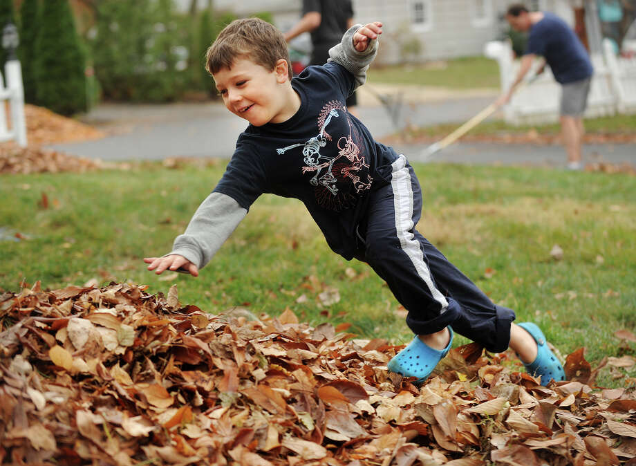 Trevor Graham, 4, makes a dive for the leaf pile during an afternoon of leaf raking with his dad Bruce and brothers Zachary and Lucas outside their Greenwich home on Sunday, November 17, 2013. Photo: Brian A. Pounds / Connecticut Post