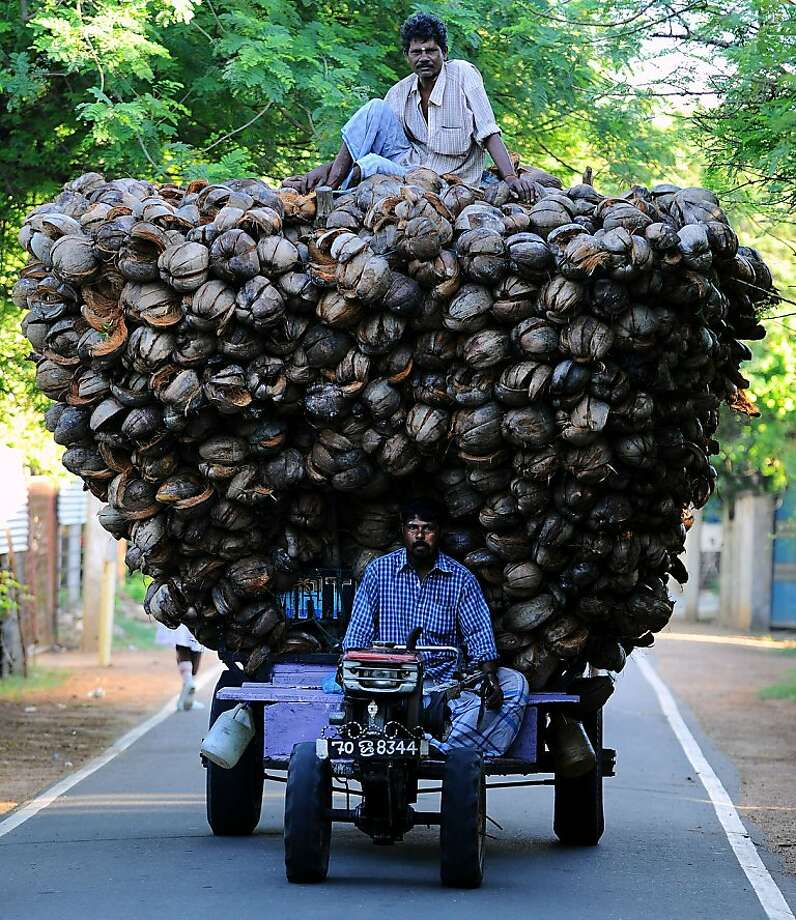 Oversize load: A pair of Tamil farmers try to corner the coconut husk market in Jaffna, Sri Lanka. Photo: Ishara S.Kodikara, AFP/Getty Images