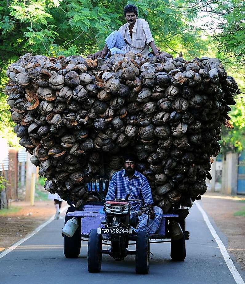 Oversize load:A pair of Tamil farmers try to corner the coconut husk market in Jaffna, Sri Lanka. Photo: Ishara S.Kodikara, AFP/Getty Images