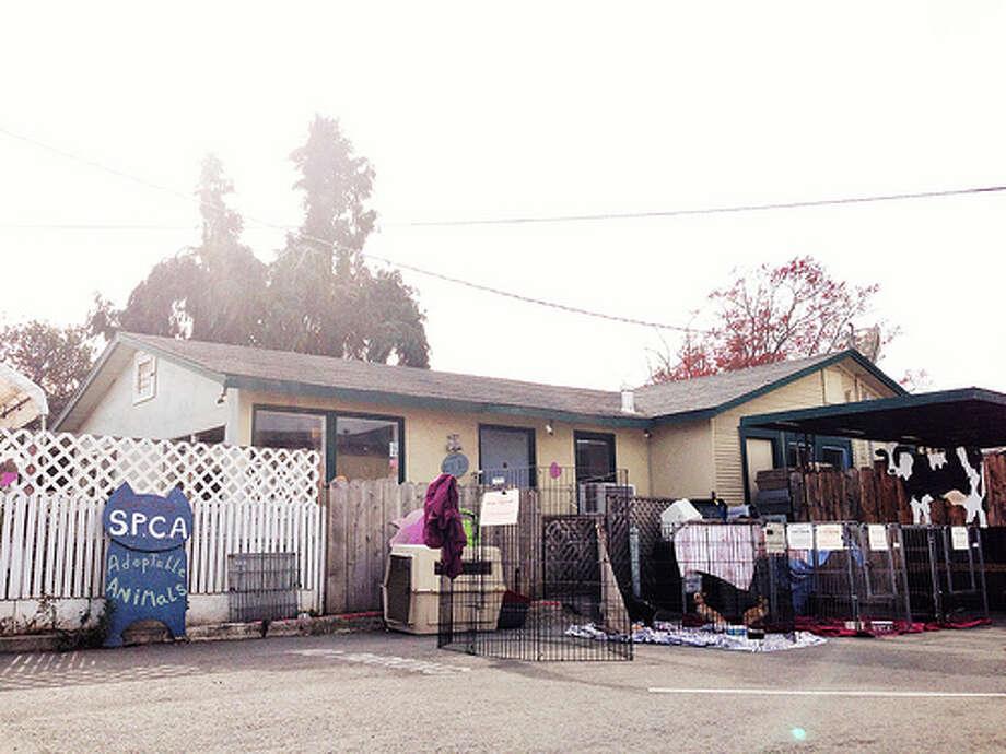 The Shyba family adopted Theo from the Santa Cruz SPCA. Photo: