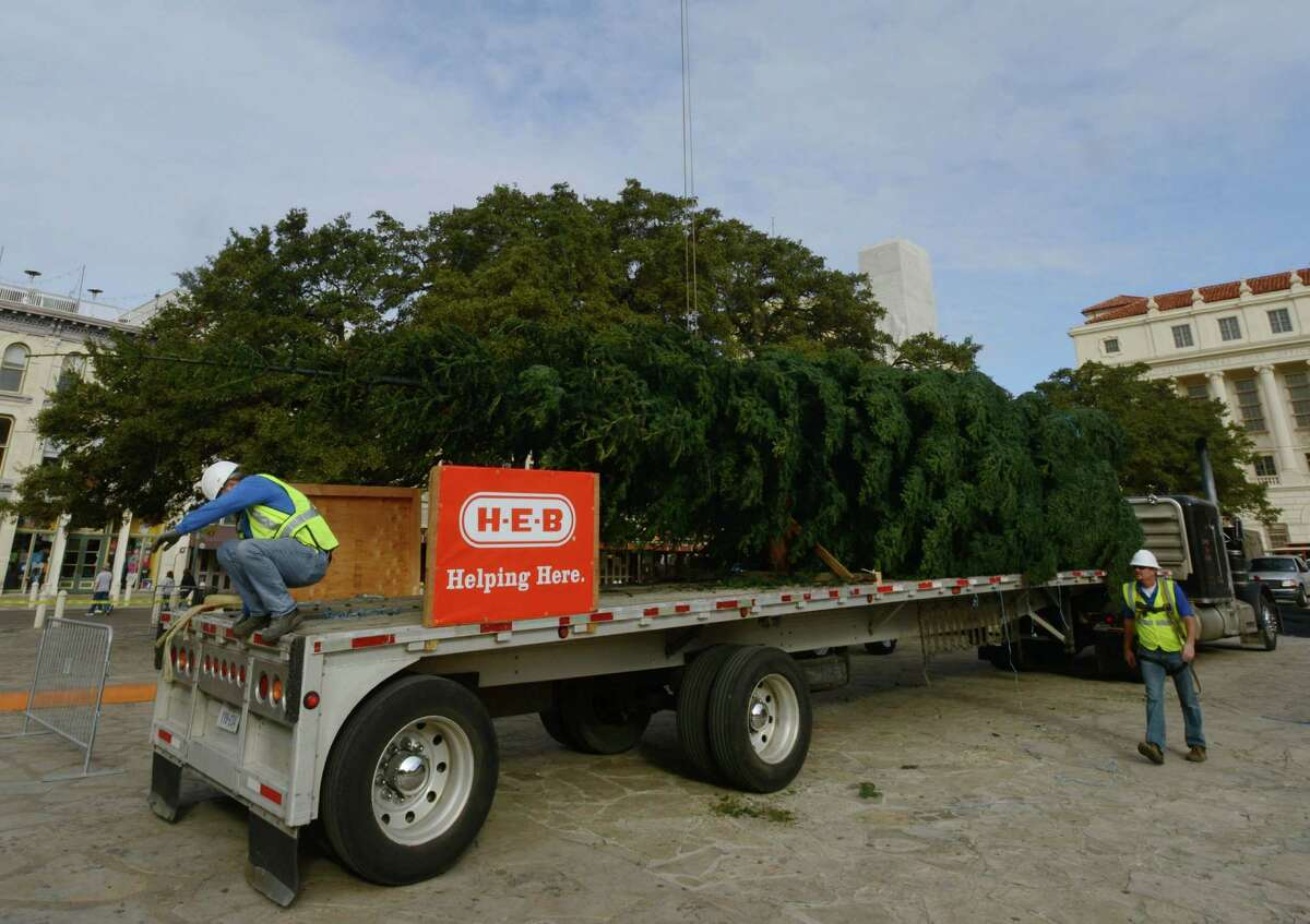The city's Christmas tree, a 55-foot white fir donated by H-E-B, arrives in Alamo Plaza on Tuesday morning, Nov. 19, 2013. The tree, from the Shasta Mountains of California, is the top portion of a large tree; the bottom portion was left in place to continue to grow.