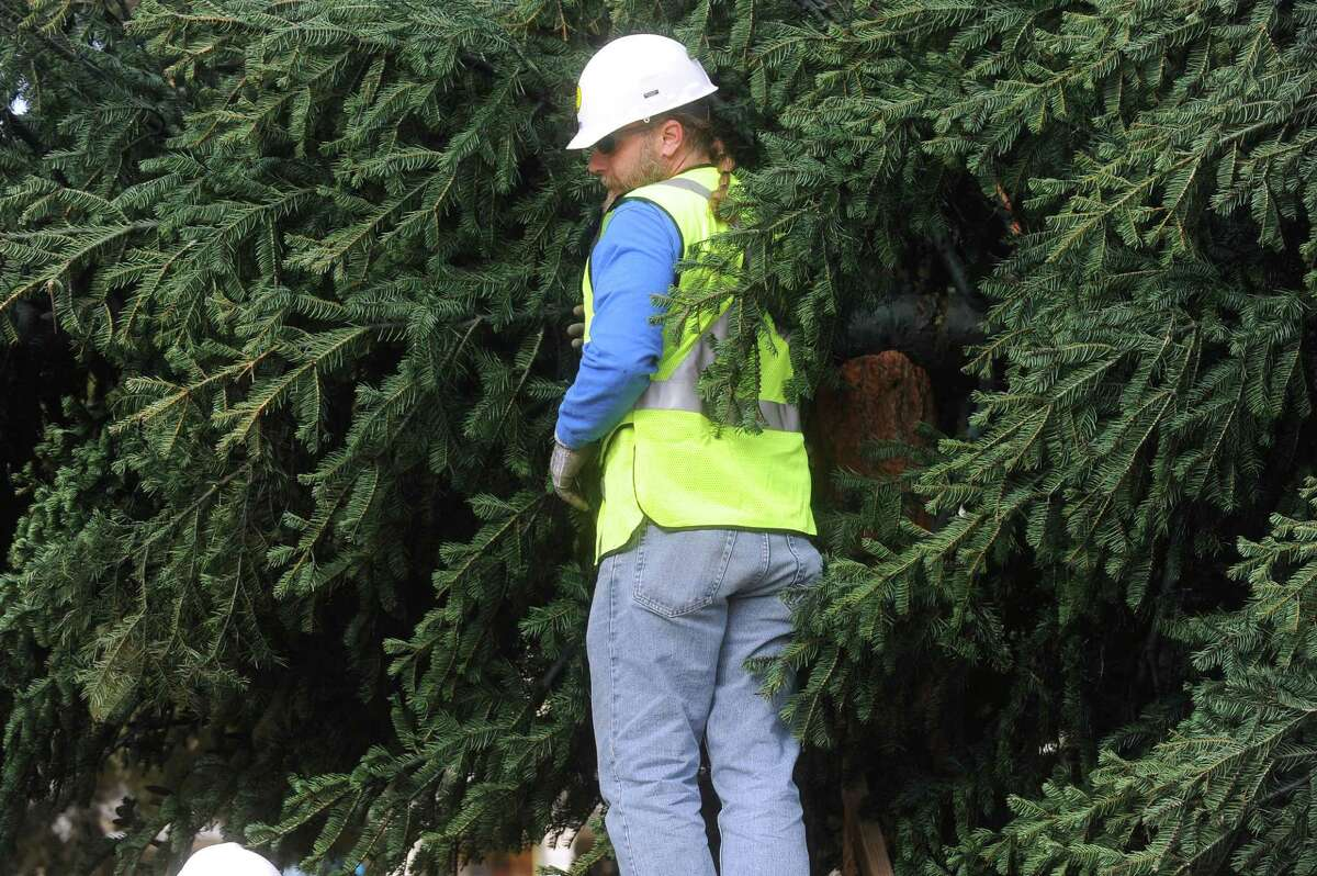 A worker attaches straps to the city's Christmas tree, a 55-foot white fir donated by H-E-B, before it is raised in Alamo Plaza on Tuesday morning, Nov. 19, 2013. The tree, from the Shasta Mountains of California, is the top portion of a large tree; the bottom portion was left in place to continue to grow.