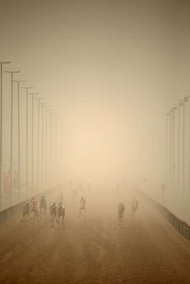 Robo crops:Robotic jockeys race camels through a sandstorm in Dubai, United Arab 