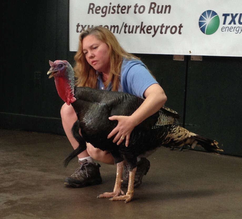 Kim Shotola, Supervisor of McGovern Children's Zoo at the Houston Zoo,  with a turkey  at the TXU Energy Turkey Calling Contest Photo: Kyrie O'Connor
