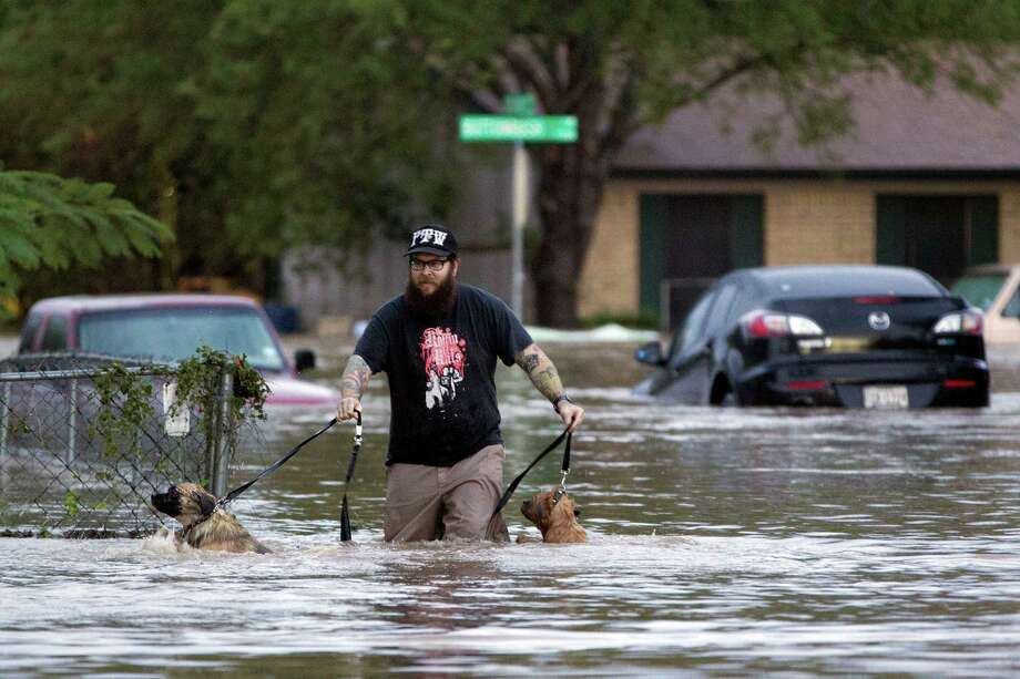 A man walks through flood waters in Austin, Texas on Quicksilver Boulevard with two dogs after heavy rains brought  flooding to the area in southeast Austin, Texas, on Thursday, Oct. 31, 2013. Heavy overnight rains brought flooding to the area. The National Weather Service said more than a foot of rain fell in Central Texas, including up to 14 inches in Wimberley, since rainstorms began Wednesday.  (AP Photo/The Austin American-Statesman, Deborah Cannon) AUSTIN CHRONICLE OUT, COMMUNITY IMPACT OUT, INTERNET MUST CREDIT PHOTOGRAPHER AND STATESMAN.COM, NO SALES Photo: Deborah Cannon, MBO / American-Statesman