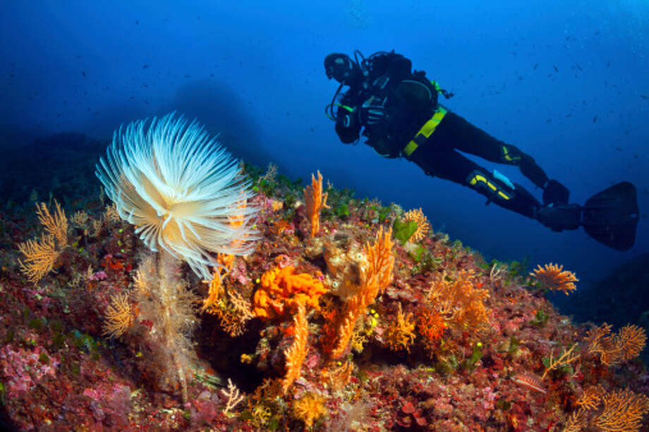 A wonderful virtual sea experience at the Monterey Bay E-Quarium  - visit live web cams