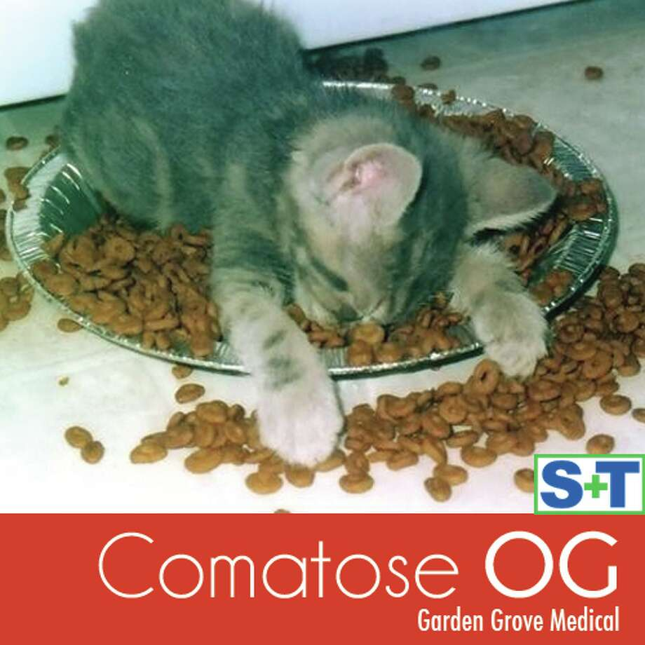 Garden Grove Medical's Comatose OG will help you hibernate like a large mammal in the winter.