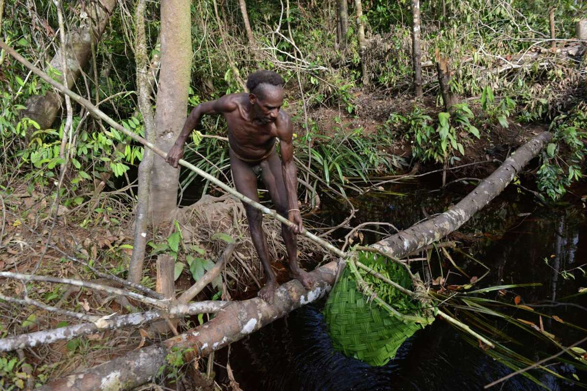 A Korowai fisherman uses a primitive net fashioned from palm fronds.