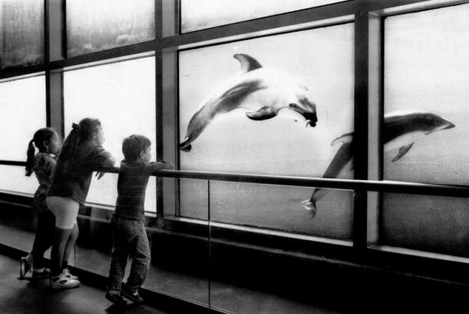 1. THE DOLPHINS: I'm happy there's one less captive dolphin exhibit in the Bay Area. But I enjoyed this as a child, with the scuba divers and feeding times etched on the glass. This exhibit made us want to work at the aquarium. Photo: Michael Maloney, The Chronicle / ONLINE_YES