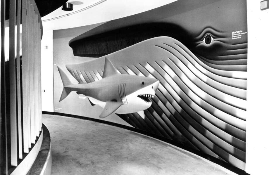 4. WHALE/SHARK MURAL: The mural at the base of the fish roundabout in the Steinhart Aquarium featured a life size great white shark, blue whale and krill. I'd love to know if the aquarium kept this piece ... Photo: Lloyd Ullberg/Cal Academy Of Sci