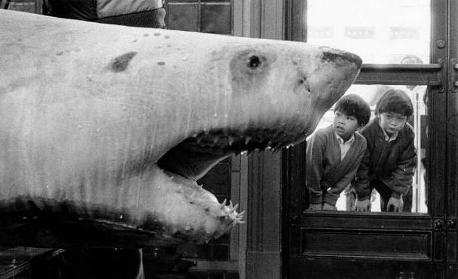8. THE FROZEN SHARK: I'm sure there was some science involved, but mostly this frozen shark near the entrance seemed strategically placed to scare the $@#% out of 2nd graders. Photo taken in 1986. Photo: Caroline Kopp, Special To The Chronicle / ONLINE_YES