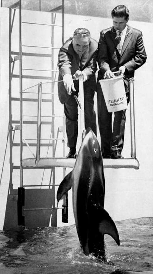 BONUS! SF Mayor George Christopher feeds a dolphin at the Steinhart Aquarium in 1963. Photo: Bill Young, The Chronicle / ONLINE_YES
