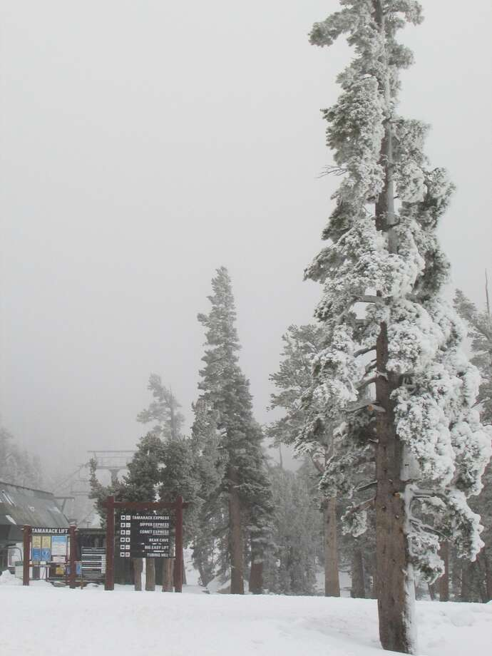 Heavenly trees Photo: Heavenly Mountain Resort