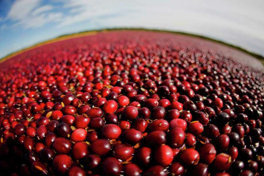 In this photo provided by the Wisconsin State Cranberry Growers Association, cranberries float in a marsh waiting to be harvested Friday, Oct. 5, 2012, near Warrens, Wis. According to the WSCGA, Wisconsin is expected to harvest 4.5 million barrels in 2012 and produces more than 50 percent of the world's cranberry supply. Today, nearly 33 percent of the U.S. cranberry crop is exported. (AP Photo/Wisconsin State Cranberry Growers Association, Andy Manis) Photo: Andy Manis, HOEP / Wisconsin State Cranberry Grower