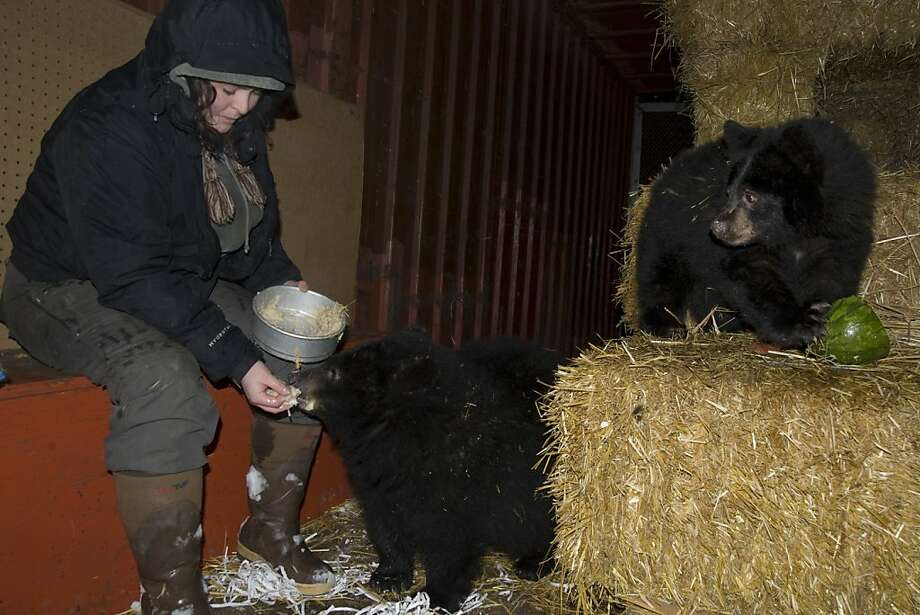 Wait, he gets oatmeal?! I want oatmeal! Volunteer Claire Turner feeds one of the two new cubs at the 