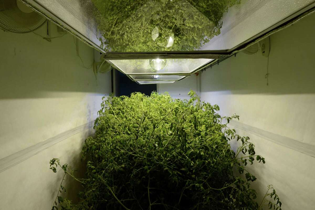 Joseph Palmieri Jr. has plans to start a medical marijuana farm at his property in Bridgeport, Conn. Awaiting state approval, Palmieri is testing out his one-of-a-kind grow pod by growing tomotoes until he has the green light to begin cultivating marijuana plants.