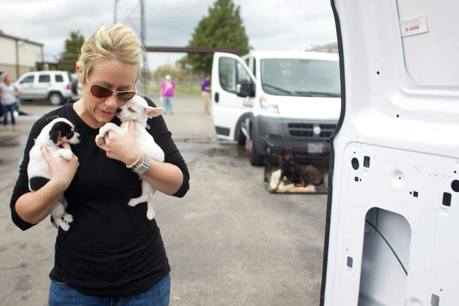 Foster mom, Katie Beirne, says goodbye to her foster puppies named Cranberry and Muffin before they were two of more than 50 dogs from BARC to be driven to local shelters in Colorado as BARC, the City of Houston animal shelter and adoption facility, and the group Rescued Pets Movement launched a new transportation program to ship the growing number of unwanted dogs from Houston to shelters in need Thursday, Nov. 21, 2013, in Houston. 