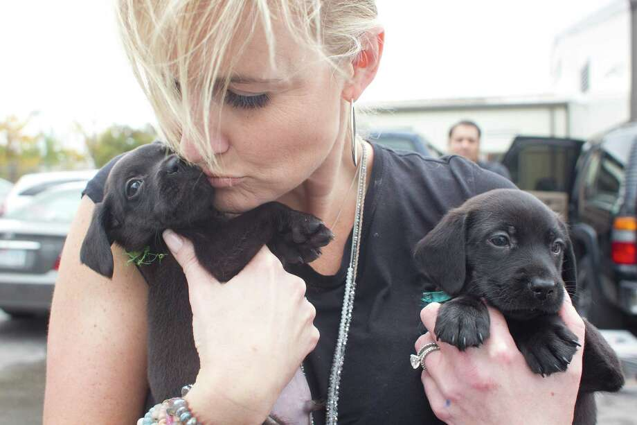Laura Carlock, co-founder of Rescued Pets Movement, cuddles two puppies Wednesday as she and others loaded 55 dogs bound for shelters in Colorado. Photo: Johnny Hanson, Staff / Houston Chronicle