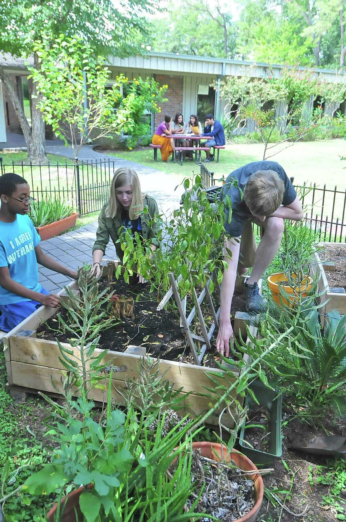 School of the Woods Montessori students Lawrence Weeden, left, Emily Froming and Riley McGuire work on their gardening health class.