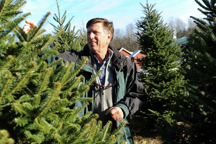 Tree farm owner Chip Ellms looks over a Fraser fir on Wednesday, Nov. 20, 2013, at Ellms' Christmas Trees in Ballston, N.Y. (Cindy Schultz / Times Union) Photo: Cindy Schultz / 00024682A