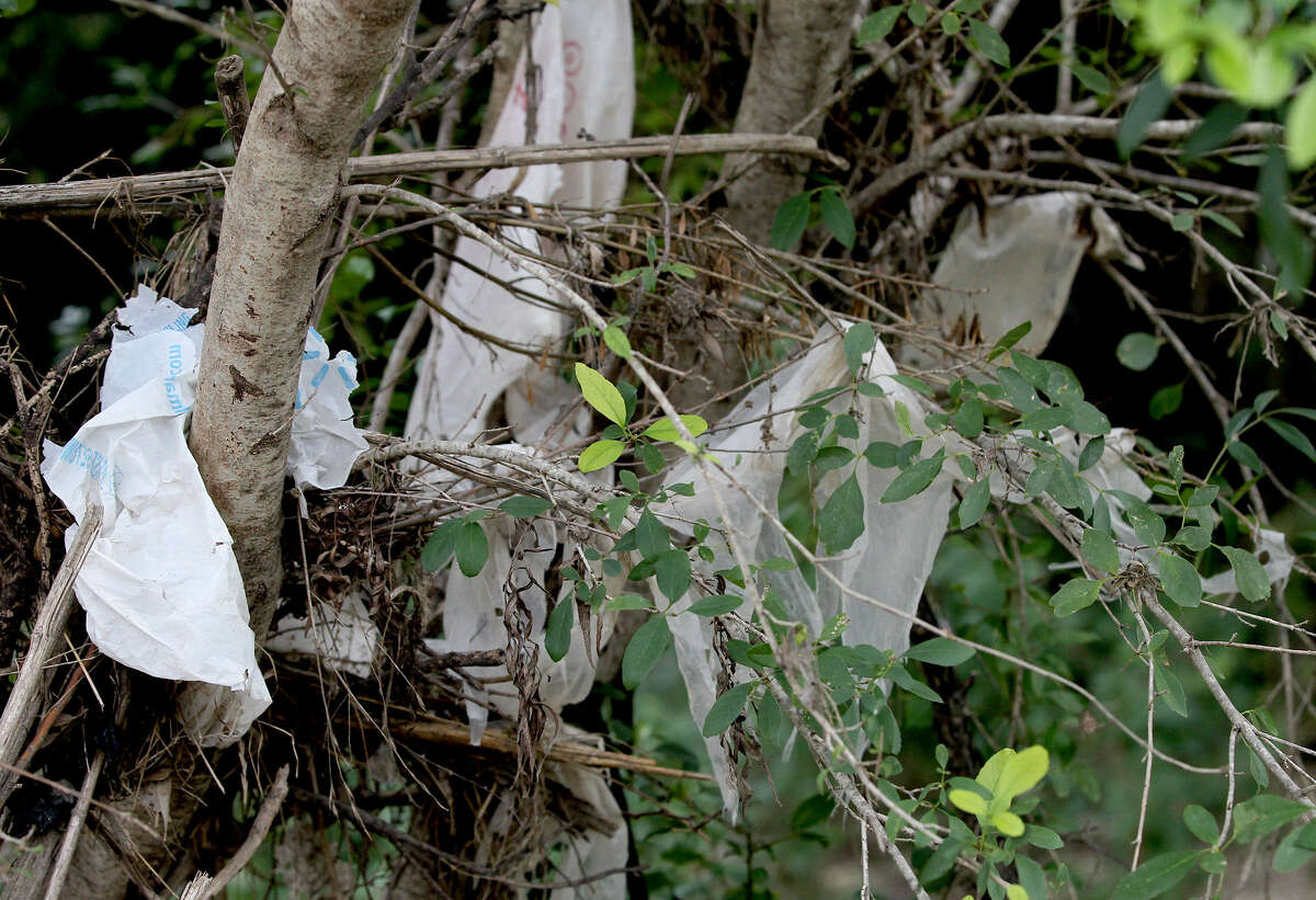 Plastic bags and other trash are strewn across trees and plants next to Jones Maltsberger Road.