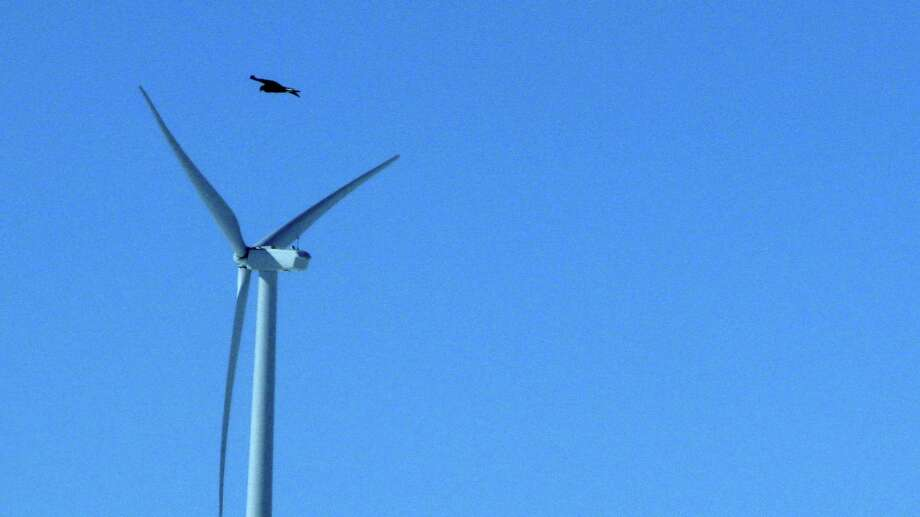 A golden eagle flies over a  wind turbine on Duke Energy's Top of the World wind farm in Converse County, Wyo., in April. Photo: Dina Cappiello, STF / AP