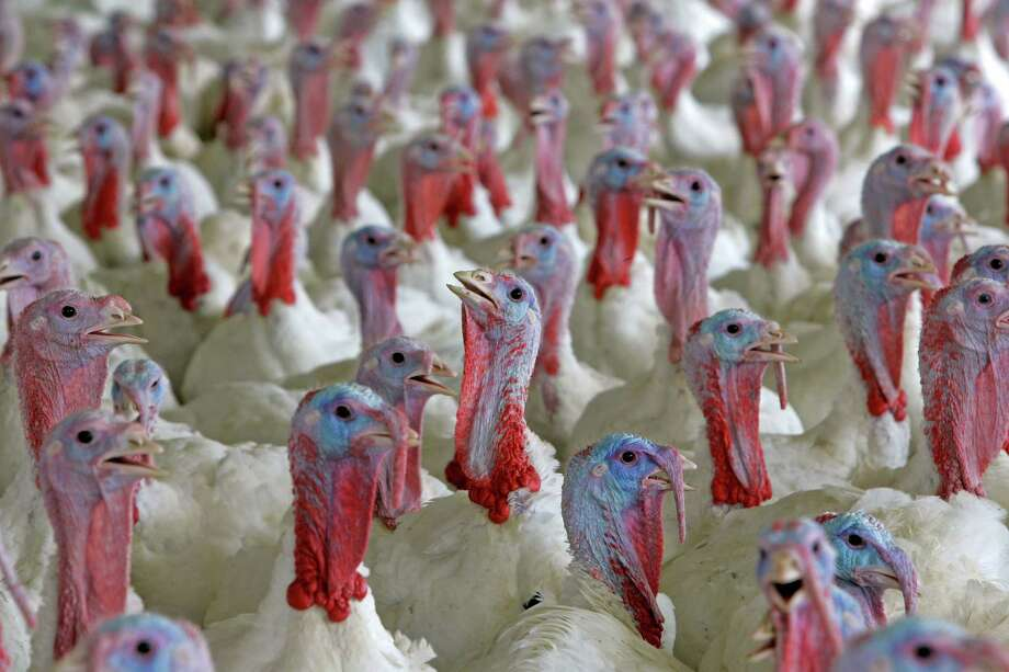 The use of antibiotics has caused concern that they could lead to antibiotic-resistant germs. Photo: GERRY BROOME, STF / AP