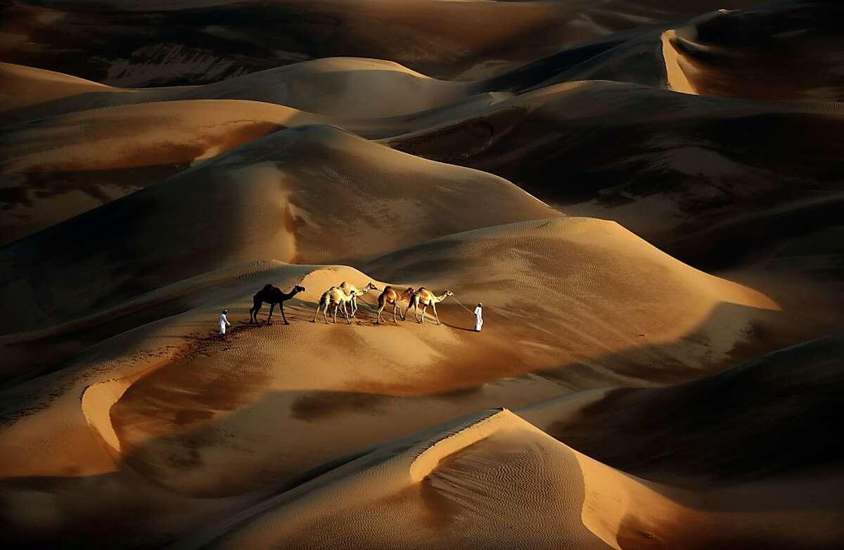 TOPSHOTS Tribesmen lead their camels through the sand dunes of the Liwa desert, 220 kms west of Abu Dhabi, on November 23, 2013. TOPSHOTS/AFP PHOTO/KARIM SAHIBKARIM SAHIB/AFP/Getty Images