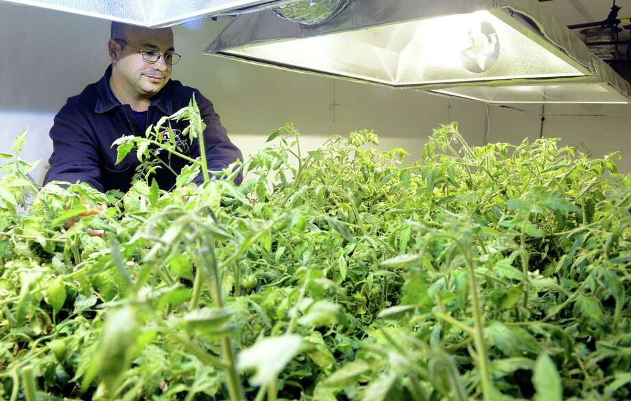 Joseph Palmieri Jr. has plans to start a medical marijuana farm at his property in Bridgeport, Conn. Awaiting state approval, Palmieri is testing out his one-of-a-kind grow pod by growing tomotoes until he has the green light to begin cultivating marijuana plants. Photo: Autumn Driscoll / Connecticut Post