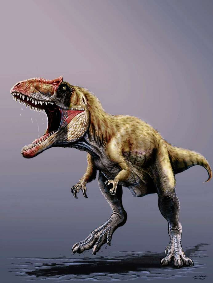 This undated artist rendering provided by The Field Museum shows a newly discovered dinosaur named Siats meekerorum. Researchers at The Field Museum, the North Carolina Museum of Natural Sciences, and North Carolina State University discovered the giant predatory dinosaur that walked the Earth approximately 100 million years ago, in the Cedar Mountain Formation in Utah. The new dinosaur is the first of its kind to be discovered in North America. The study appears in the Nov. 22, 2013 issue of Nature Communications. Photo: Uncredited, AP / AP2013