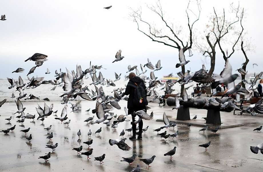Pigeons get a free lunchon a rainy day in Istanbul. Photo: Bulent Kilic, AFP/Getty Images