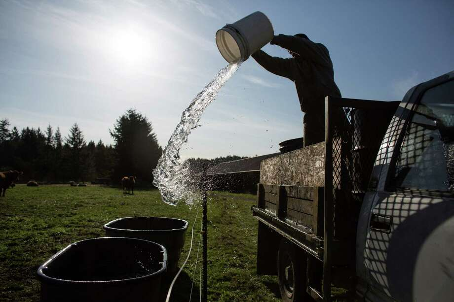 """Farmer Jon Bachus waters grass-fed cattle on the Stokesberry Sustainable Farm near Olympia. Farm owner Jerry Stokesberry said the farm is like a training ground for employees. """"When you get on a farm, you really learn how to work,"""" he said. Photo: JOSHUA TRUJILLO, SEATTLEPI.COM / SEATTLEPI.COM"""