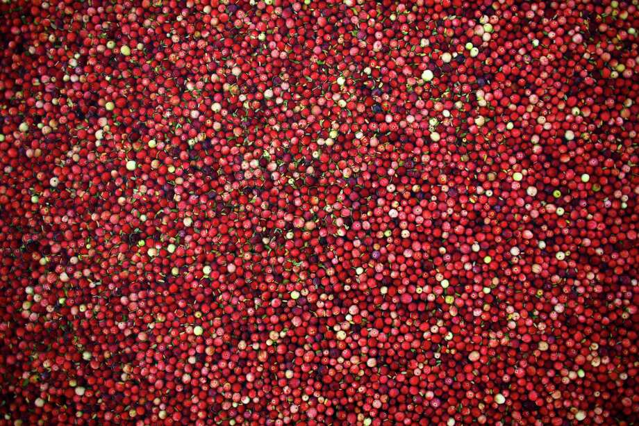 Cranberries are shown floating in a bog during the the October 11, 2013 harvest at Cran Mac farm in Ilwaco, on the Washington coast. The farm is a supplier to Ocean Spray. The berries grow on a small bushes in bogs that are flooded and  agitated with a machine, which causes the berries to float to the top  for harvest. Photo: JOSHUA TRUJILLO, SEATTLEPI.COM / SEATTLEPI.COM