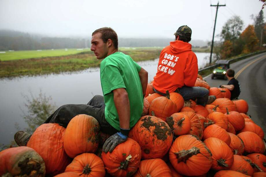 Marcus McAulliffe and Nick LaFleur ride on a pile of pumpkins in a truck after gathering them from a field at Bob's Corn in Snohomish County. The popular farm is run by Bob and Sarah Ricci and their five daughters. Photo: JOSHUA TRUJILLO, SEATTLEPI.COM / SEATTLEPI.COM