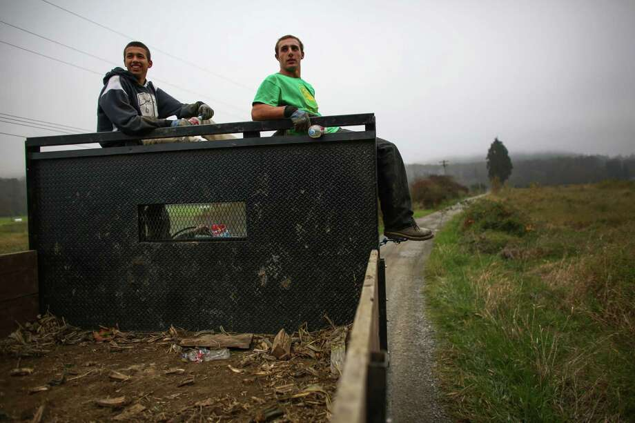 Workers Clayton Juarez and Marcus McAuliffe sit on an empty truck as it returns to a field to be loaded at Bob's Corn Farm in Snohomish County. The farm employees area young people during harvest time. Photo: JOSHUA TRUJILLO, SEATTLEPI.COM / SEATTLEPI.COM