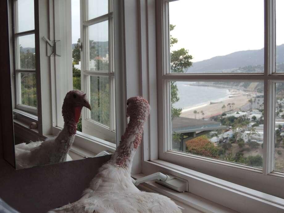 Jessica Turkey contemplates her life. Photo: Matt Washil, Courtesy Karen Dawn