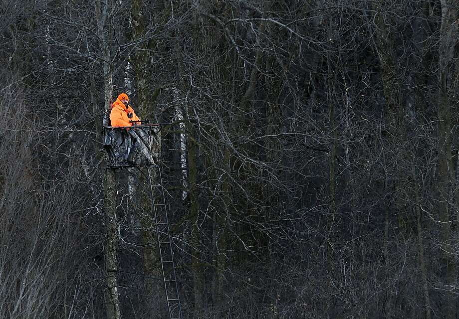 Head's up, Bambi:The DayGlo tree sitter can mean only one thing - buck season has arrived near Shiocton, 