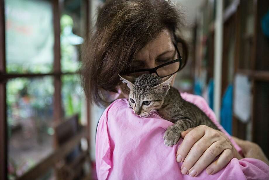 The cat lady of Bali: Elizabeth Henzell cuddles a kitten at Villa Kitty, a shelter she started for abandoned cats in Ubud, Bali. Photo: Putu Sayoga, Getty Images