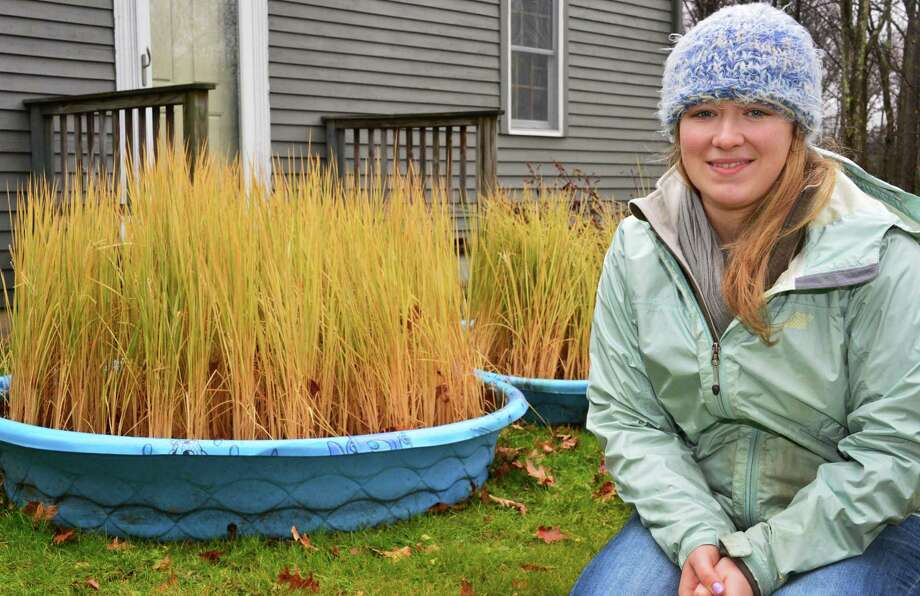 Alex Kline next to her failed rice crop Friday Nov. 22, 2013, in East Nassau, NY.  (John Carl D'Annibale / Times Union) Photo: John Carl D'Annibale / 00024734A