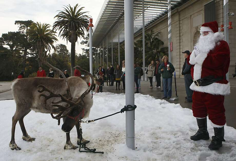 Yukon (left) stands in the snow with Norm Penny (Santa, right), senior entomology collections manager at the California Academy of Sciences in San Francisco, Calif., on Tuesday, November 26, 2013.  Reindeer return as part of the academy's annual 'Tis the Season for Science' exhibit which opens to the public on November 27.  They are here this morning to entertain the public. Photo: Liz Hafalia, Chronicle
