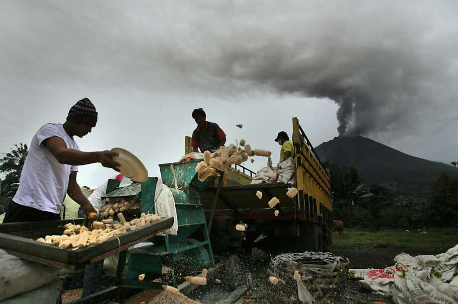 Workers shell corn as Mount Sinabung is spewing volcanic ash in Berastepu, North Sumatra, Indonesia, Tuesday, Nov. 26, 2013. Authorities raised the alert status of the volcano to the highest level on Sunday after it had a series of eruptions.  Photo: Binsar Bakkara, Associated Press