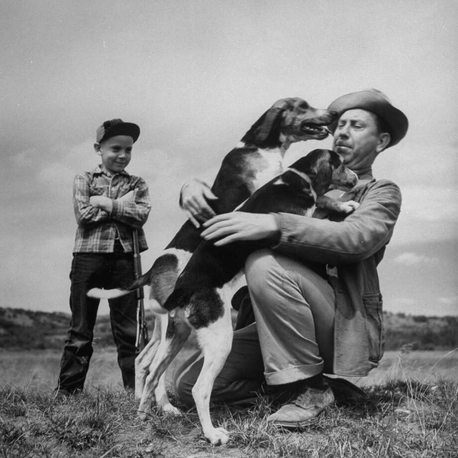 Dogs Nettie and Duke greeting Author Fred Gipson and his son Mike before the coon hunt, 1949. Photo: Thomas D. McAvoy., Time & Life Pictures/Getty Image
