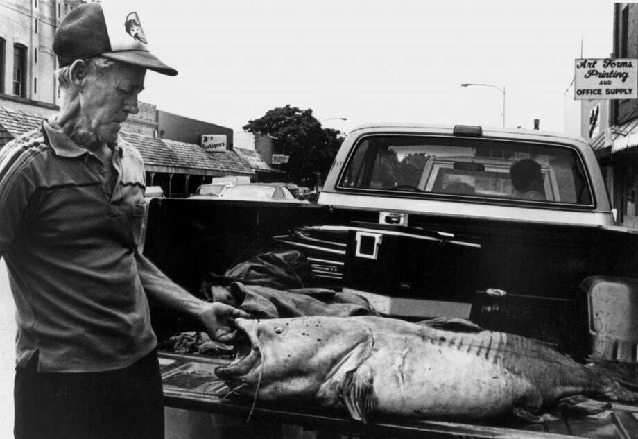 A man stands next to a 98 pound flathead catfish caught on June 2, 1986 near Lewisville, Texas and displayed on the back of a pickup truck. Photo: IGFA, Getty Images