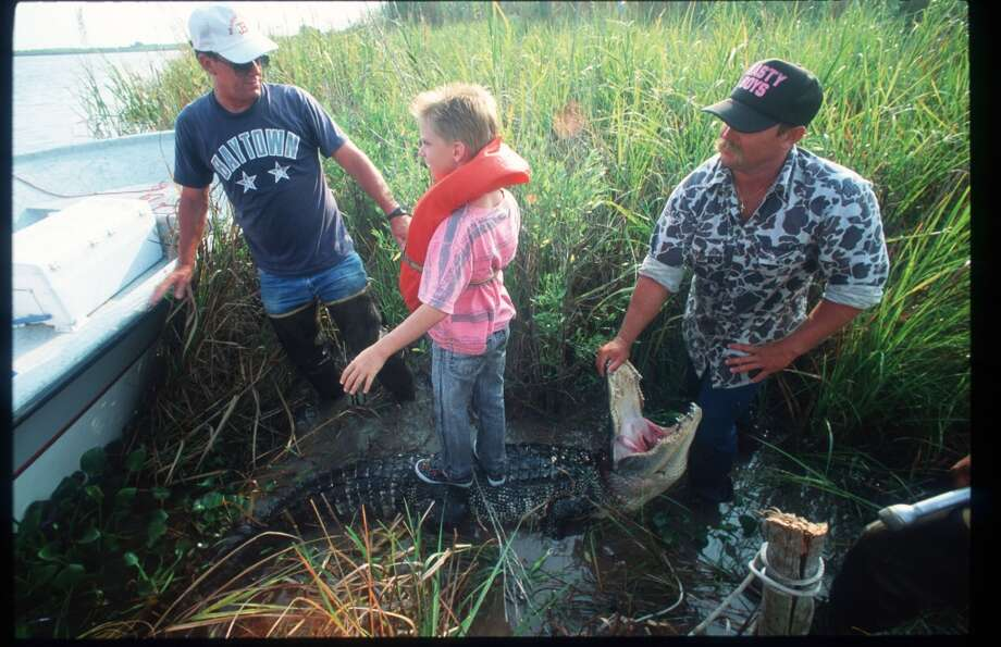 103354 27: A child stands on a dead alligator during Gatorfest September 16, 1991 in Anahuac, TX. Hunters in Texas can only kill a certain number of alligators, must report each kill to the Texas Parks and Wildlife Department, and are paid by the foot by buyers for each alligator harvested. (Photo by Paul S. Howell/Liaison) Photo: Paul S. Howell, Getty Images